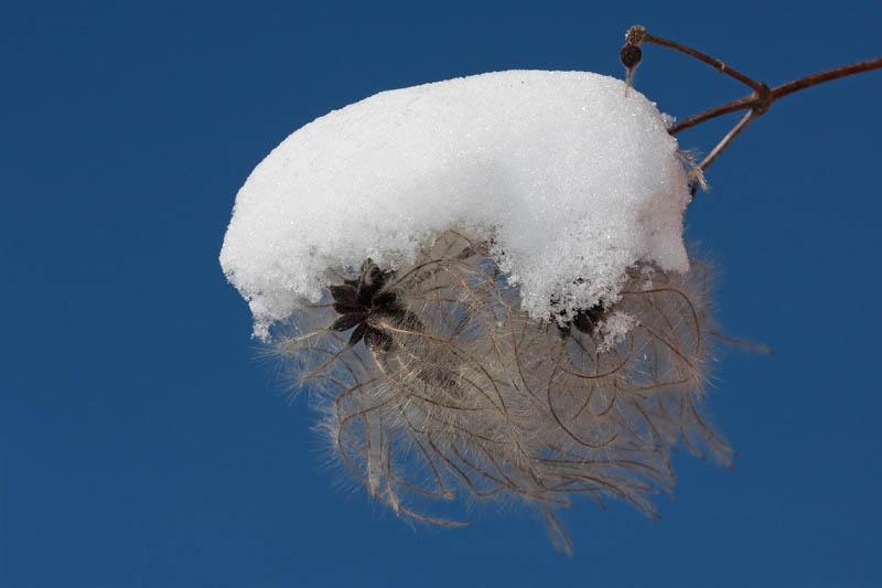 Snowball sne¾na kepa_MG_5873-11.jpg