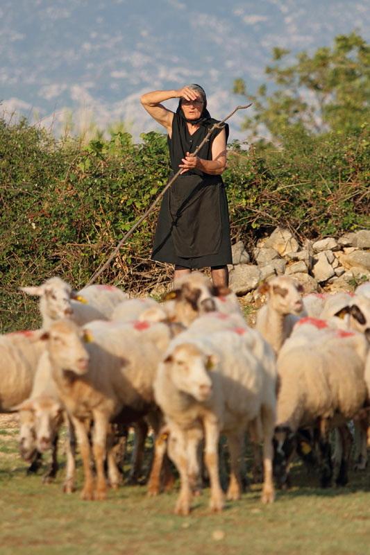 Shepherd pastirica_MG_1791-11.jpg
