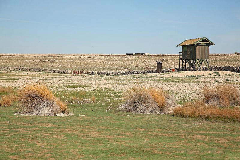 Veliko Kolansko blato wetland_MG_47-11.jpg