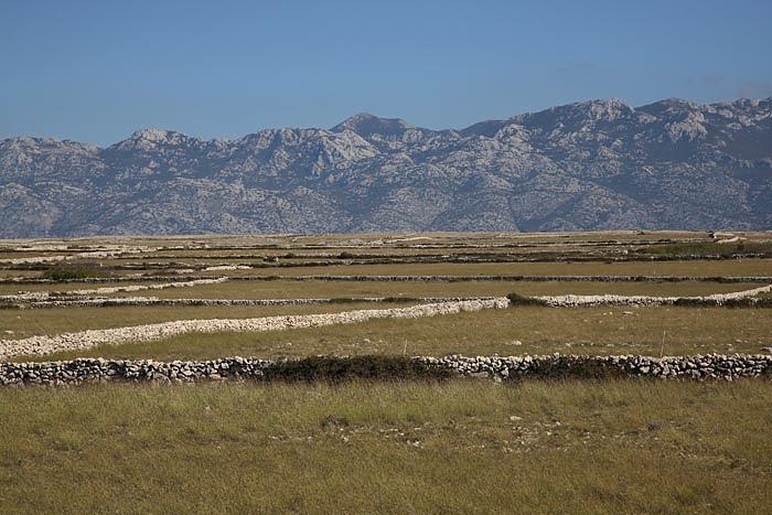 Pastures and stone fences pa¹niki in kamnite ograje_MG_4973-1.jpg
