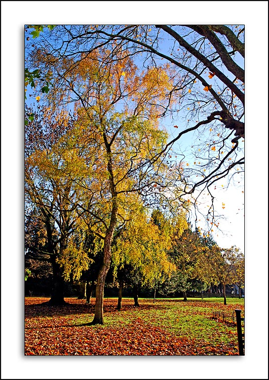 Tree in the park, Wells