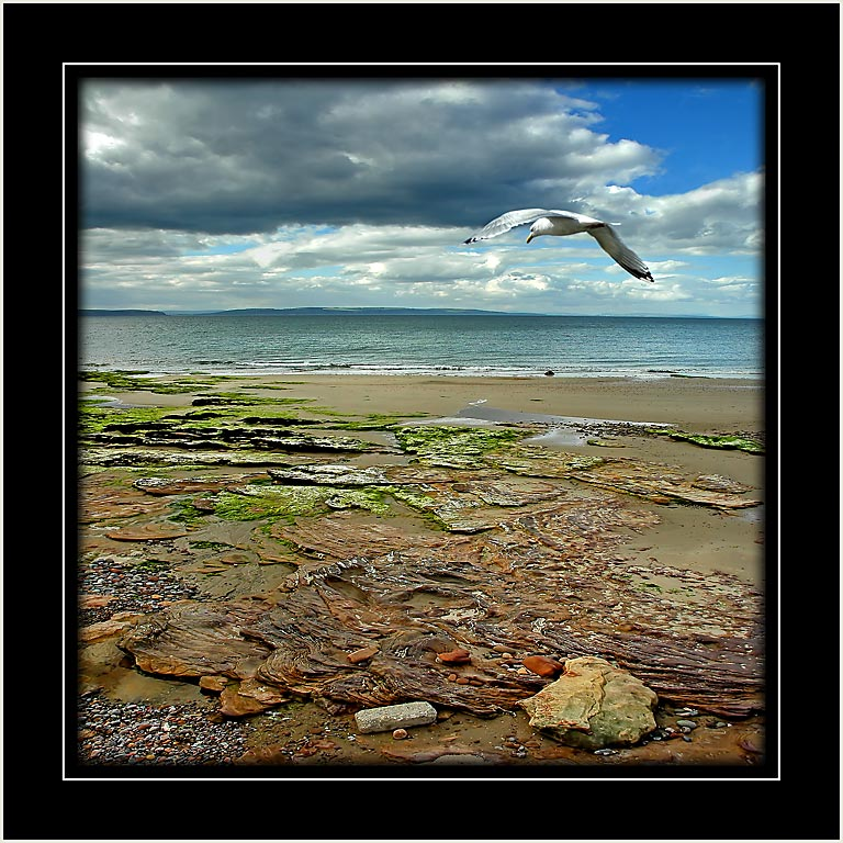 Gull and beach, Nairn