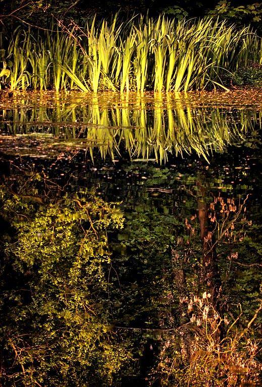 Reedsnrushes, Wayford Woods, Somerset