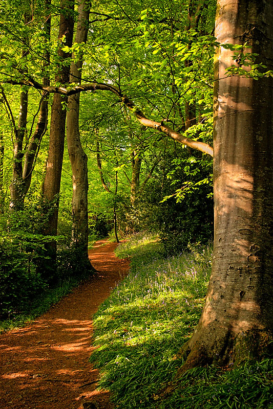 Path through Wayford Woods, Crewkerne (13014)