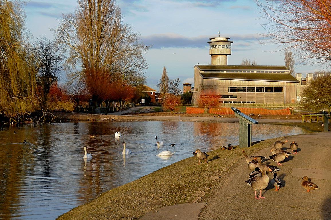 Pond and Centre, Slimbridge