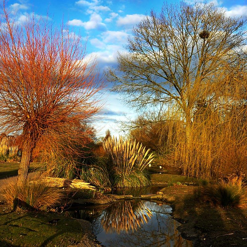 Trees of all colours, Slimbridge