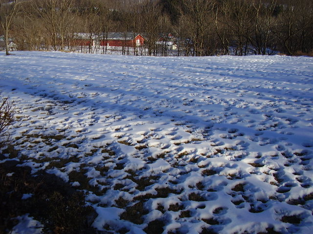 deer footprints 011.jpg
