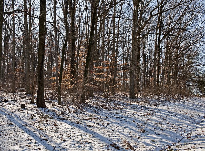 National Arboretum shadows