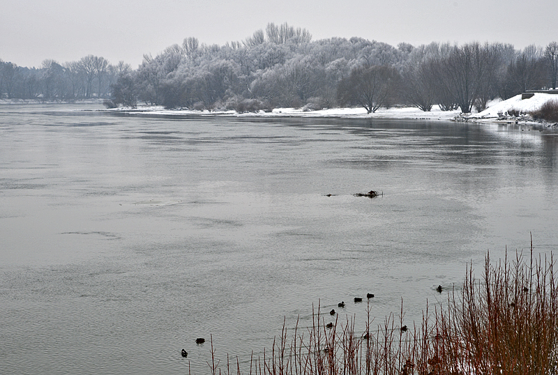 Gray day on the Danube