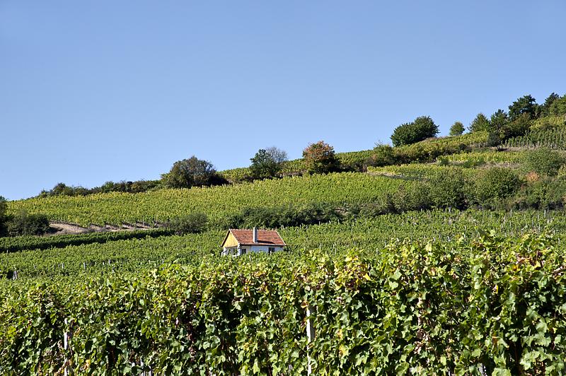 Tokaj wine country