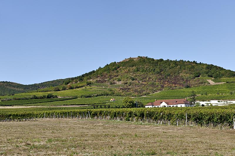 Patricius Winery and Vineyard
