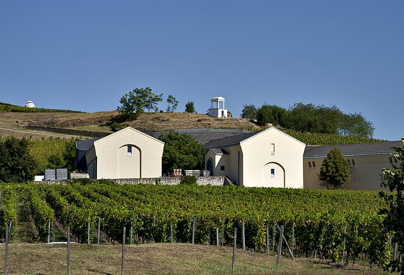 Sárga Borház winery