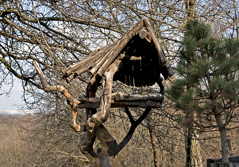 Forest Art Center, organic bird house
