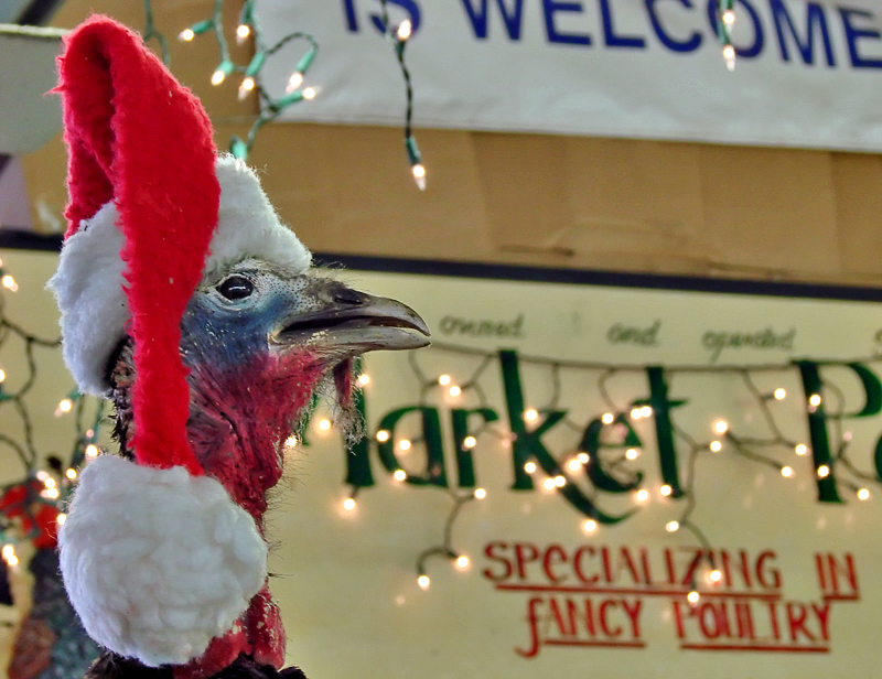 Fancy Poultry (Eat, Drink, Be Merry Challenge)
