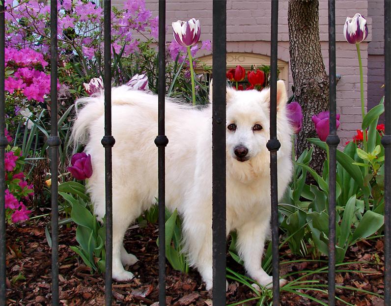 Spring garden and model
