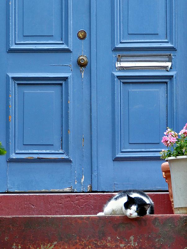 Doorway cat