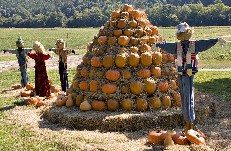 Biltmore Harvest Days