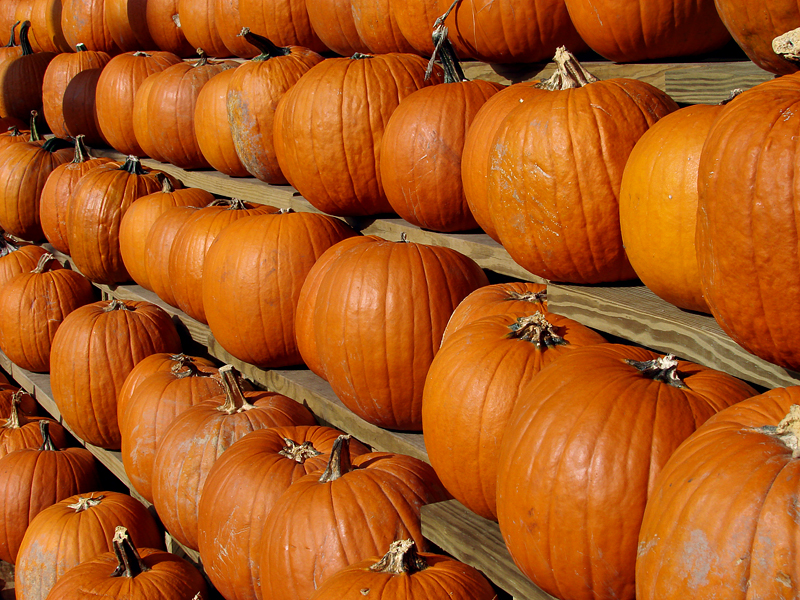 Halloweens on the way (Arlington, VA)