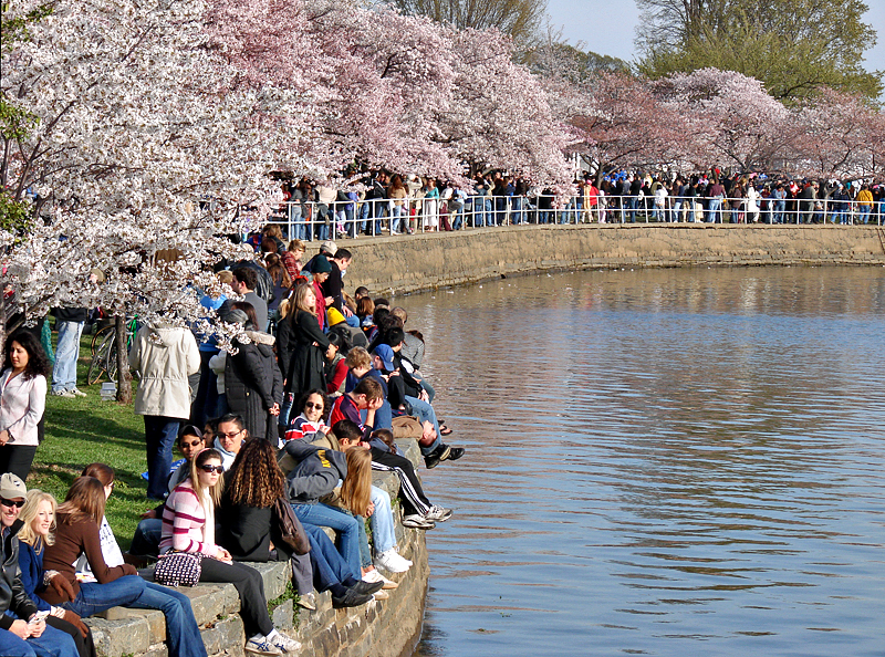 All Washington at Cherry Blossom Festival