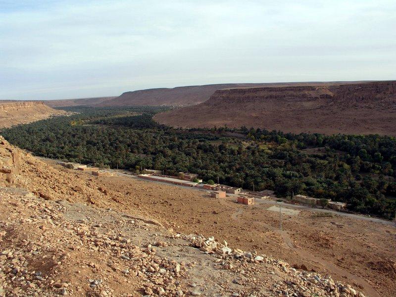 002 Date oasis, left view.JPG
