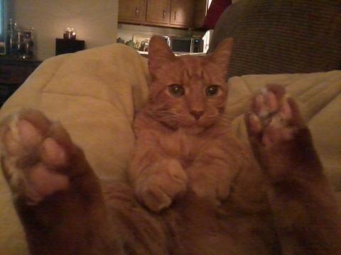 carrot feet.jpeg