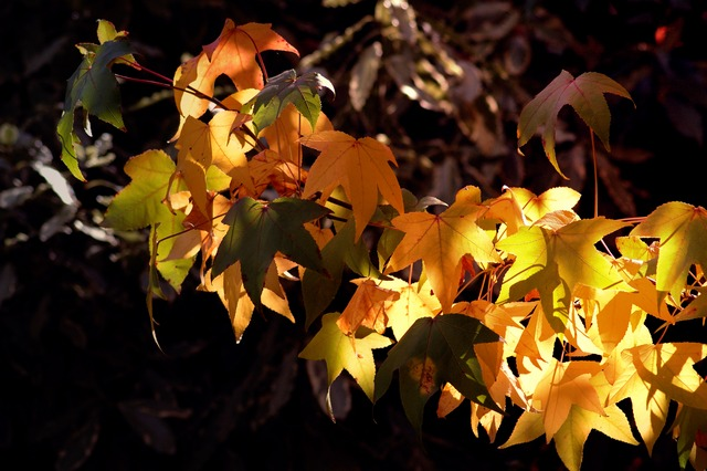 autumnal gold