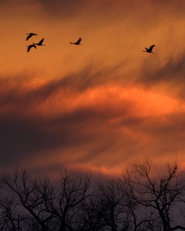 2008-3-22 4978 4979 Platte River Sunset II - Crop III.jpg