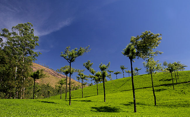 Tea & Trees
