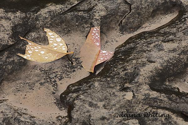 Windblowen Leaves