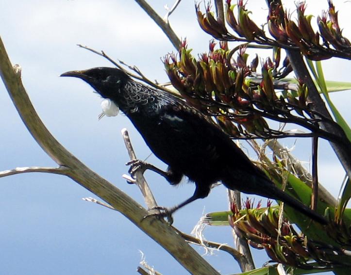 NZ Bird.jpg