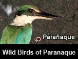 Wild Birds of Paranaque