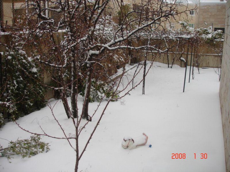 Snow in Amman 30.01.2008 018.jpg