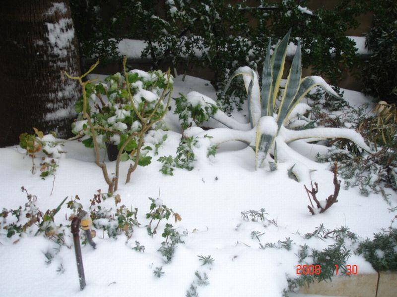 Snow in Amman 30.01.2008 024.jpg