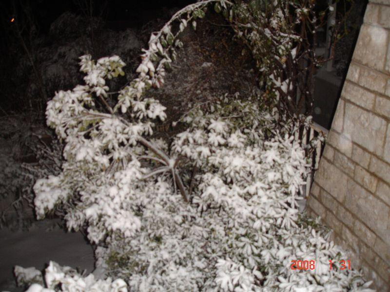 Snow in Amman 30.01.2008 036.jpg
