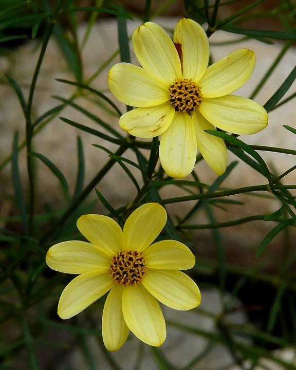 FLOWERS (ISO 200)
