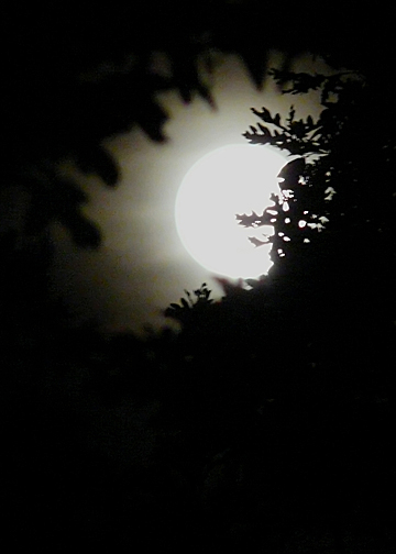 MOONGLOW (ISO 800)