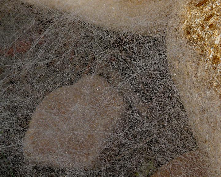 WEB LABYRINTH - DEW ON SPIDER WEB