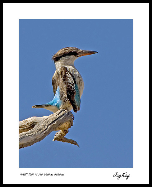 King Fisher 3