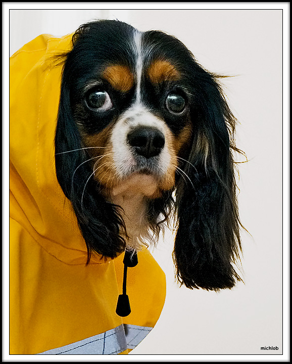 Modeling a Designer Raincoat at Flawless Paws