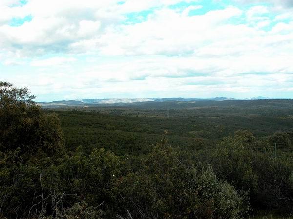 Nature Park Andujar - Parque Natural de Andujar (Sierra Morena) Wolf area