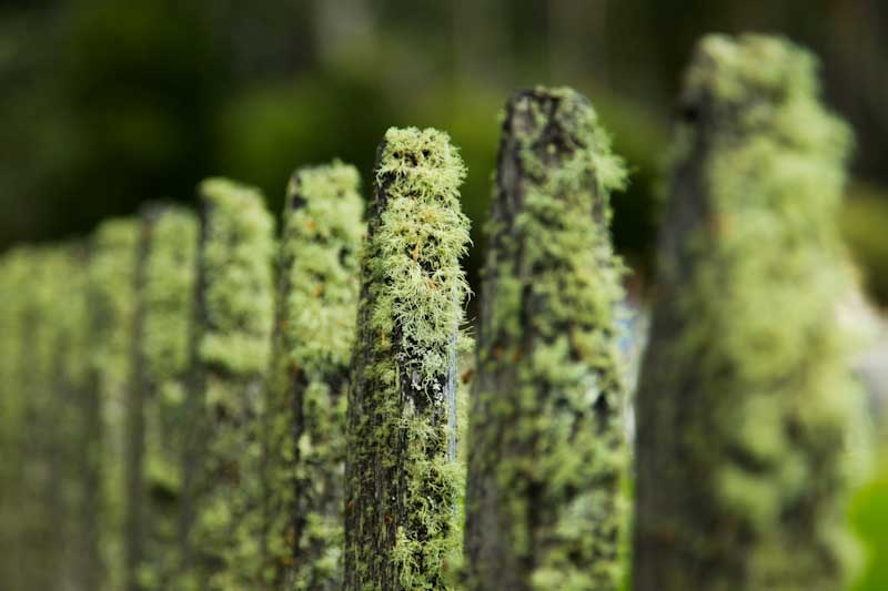 Artsy shot of moss on a fence