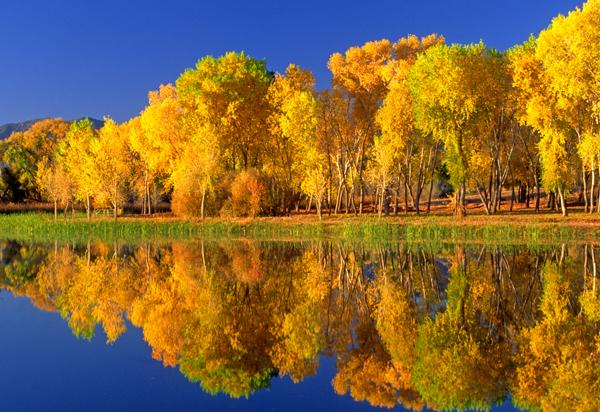 Dead Horse Ranch State Park, Cottonwood, AZ