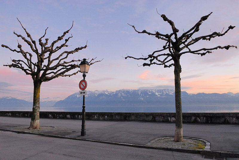 Swiss Trees and French Alps