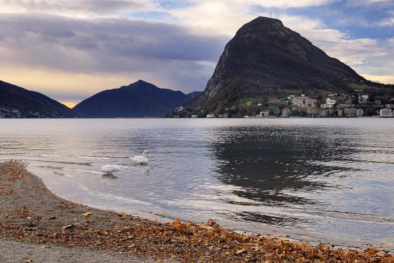 Swans Enjoying the View of Monte San Salvatore