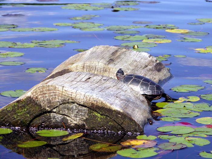 turtledays.jpg