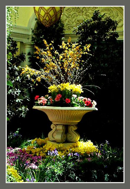 Belagio Flowers