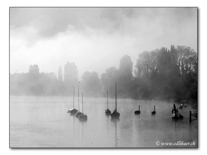 Morgennebel / morning mist (8549)