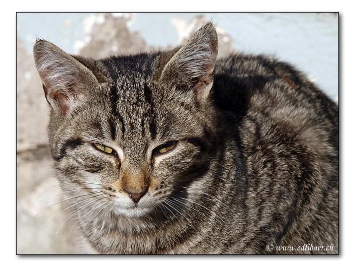 cat / Katze