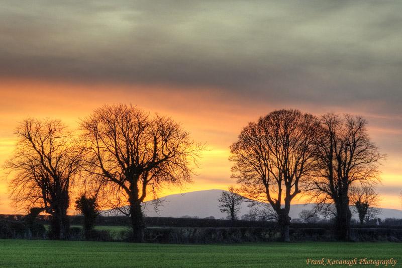 Sunset Trees.jpg