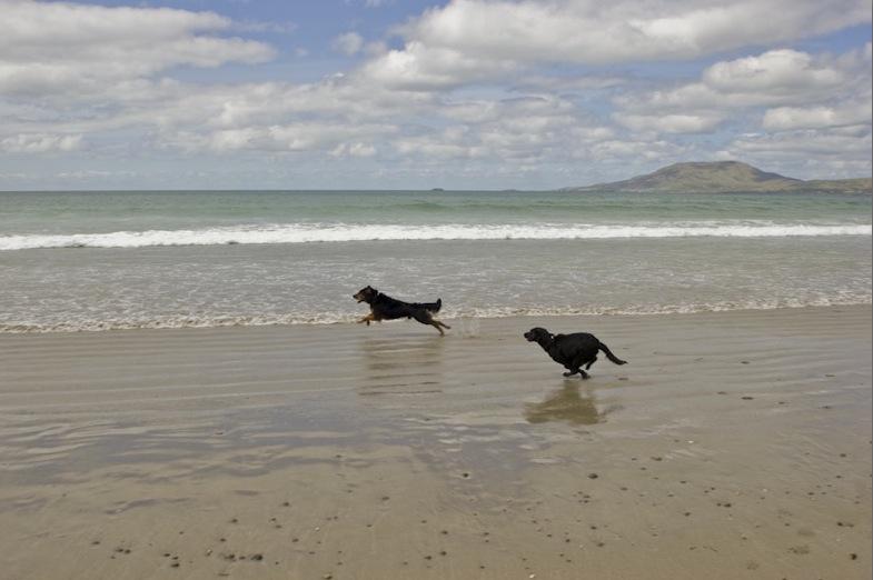Doglife 9.jpg
